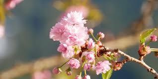 Mevsim Bahar: Ruhumuz Kıpır Kıpır